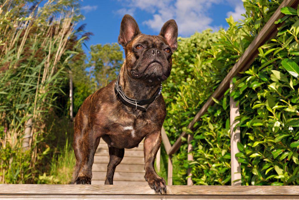 Hunde Fotoshooting auf einer Treppe