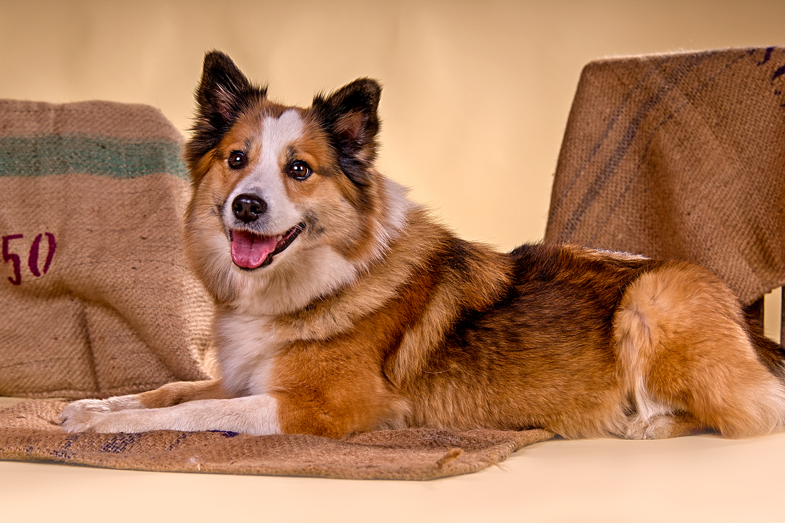 Hunde Fotoshooting im Studio