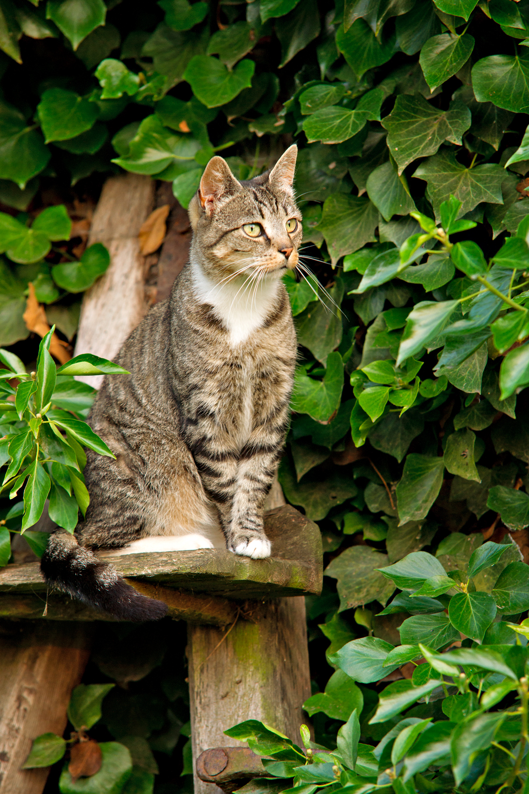 Katze-auf-Ansitz