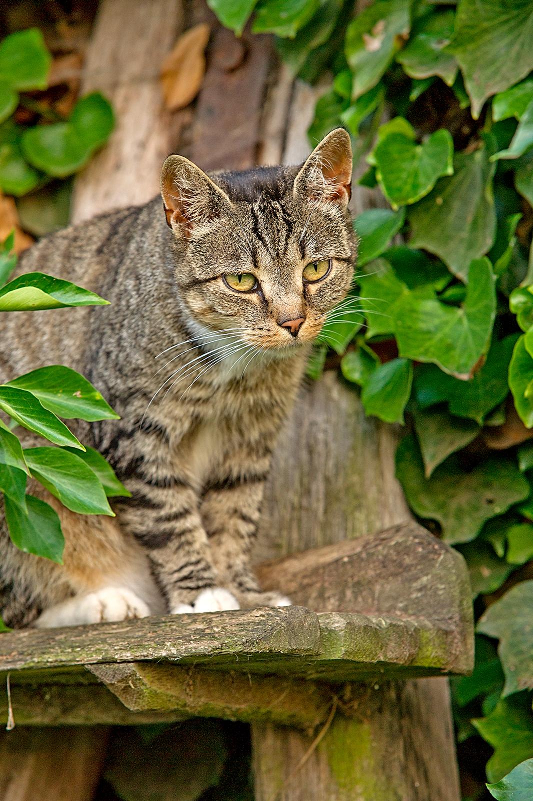 Katze-im-Baum