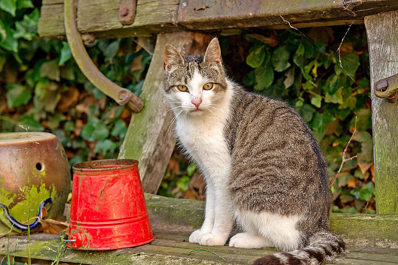 Katze-vor-Eimer