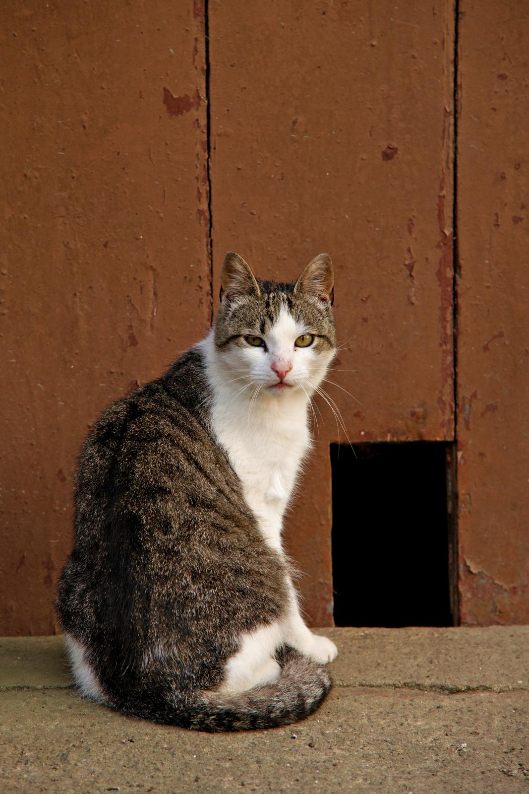 Katze-vor-Scheune