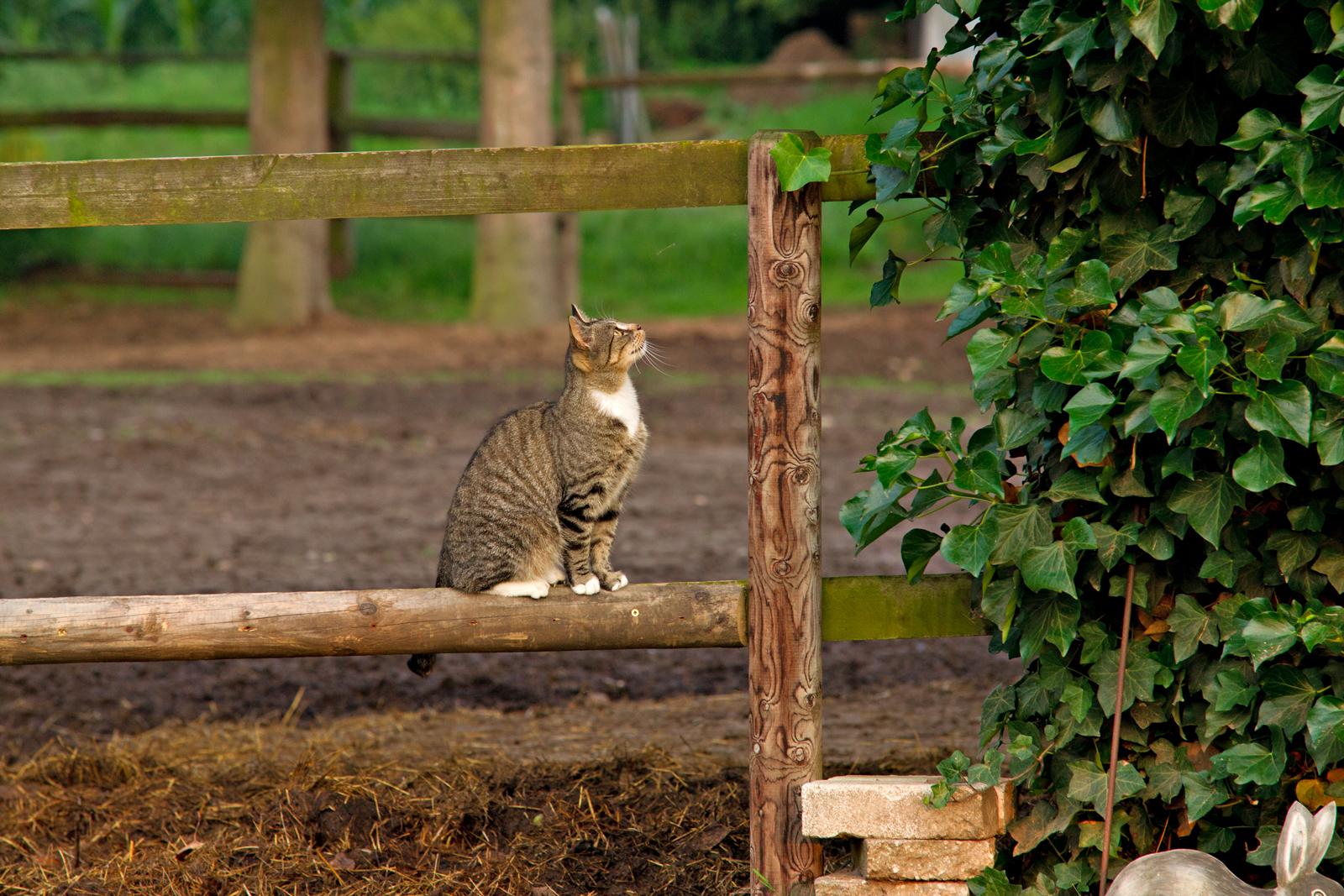Katzenportrait-seitlich