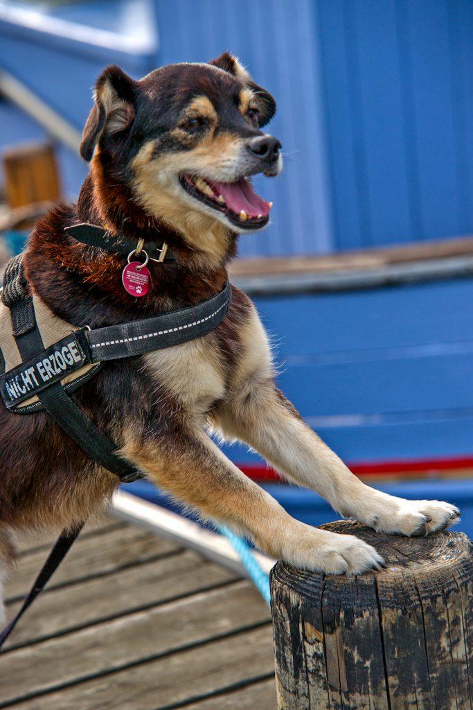 Hunde Fotoshooting am Hafen