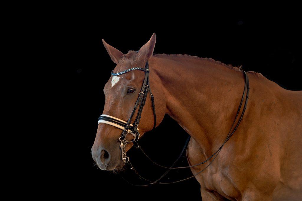Pferdeshooting-1