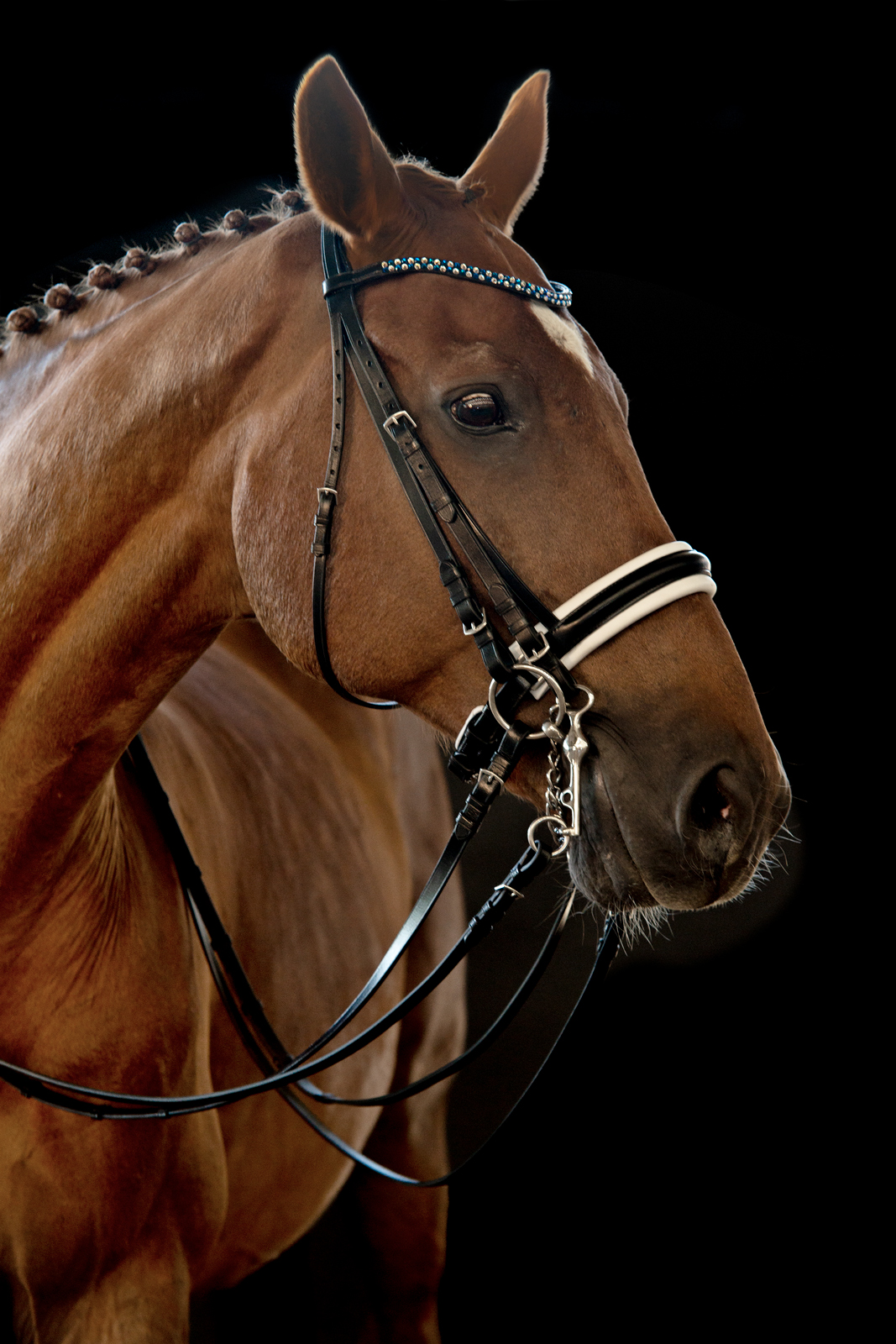 Pferdeshooting-2