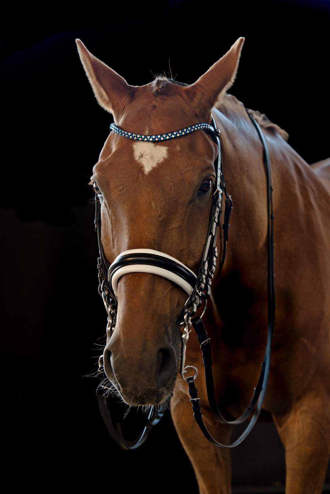 Pferdeshooting-3