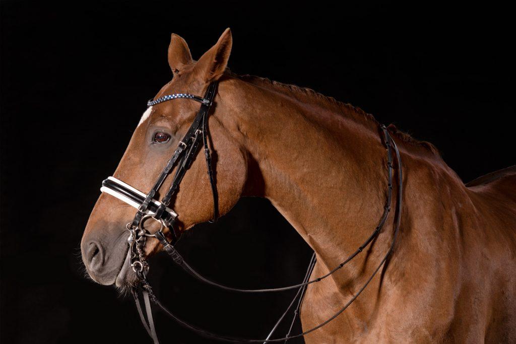 Pferdeshooting-4