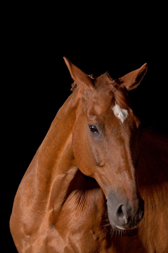 Pferdeshooting-5