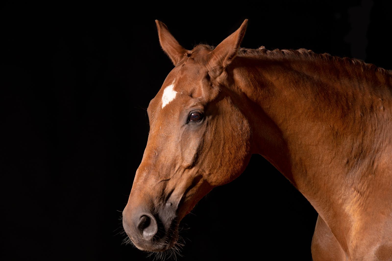 Pferdeshooting-6