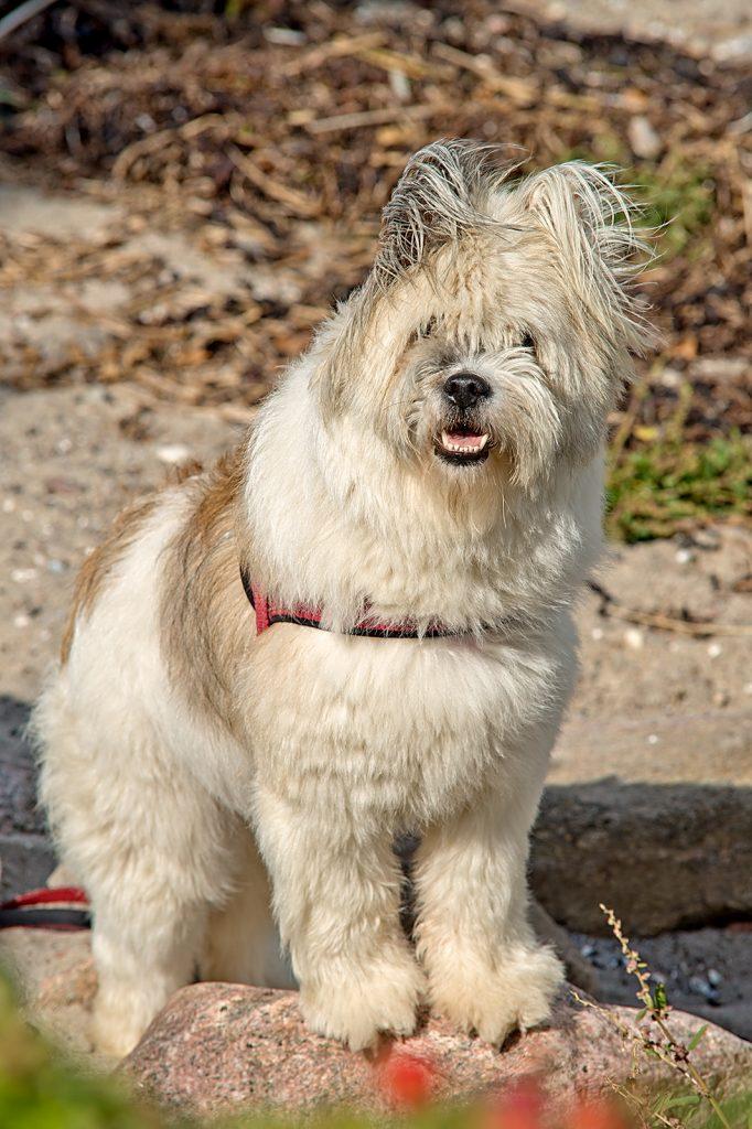 Hunde Fotoshooting am Strand